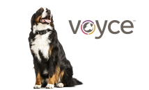 Voyce Smart Collar