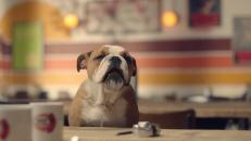 Talking Animal VFX // 'Dog Cafe', Association of British Insurers